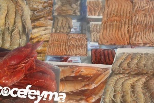 feyma-1F8A0BAE5-6F2B-CA0D-51A4-9C15D56E3C82.jpg